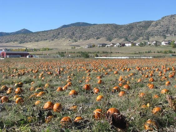 Download Free Denver Botanic Gardens Pumpkin Patch Editormanager